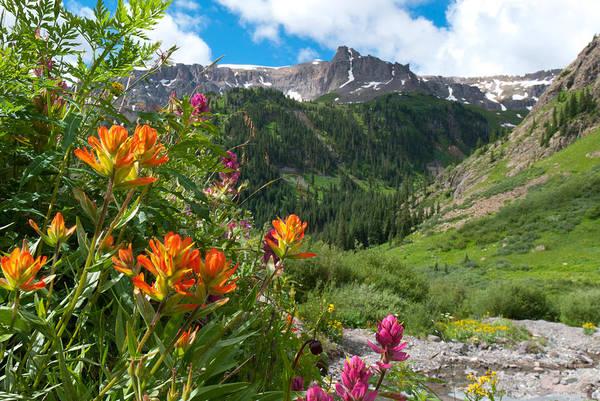 Photograph - San Juans Indian Paintbrush Landscape by Cascade Colors