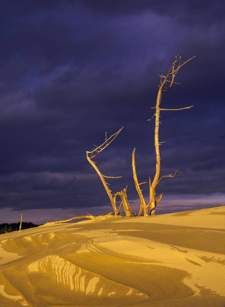 Photograph - Sand And Trees by Robert Potts