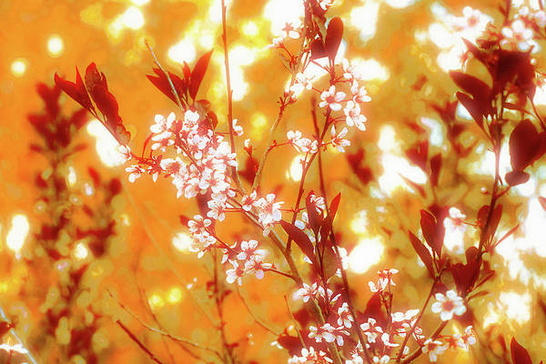 Digital Art - Sand Cherry Orange by Donna L Munro