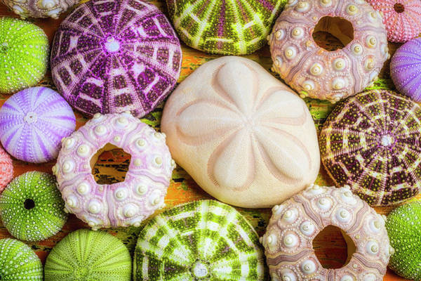 Wall Art - Photograph - Sand Dollar And Sea Urchins by Garry Gay