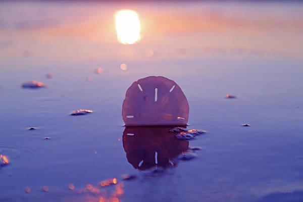 Magic Kingdom Photograph - Sand Dollar Sunset by Betsy Knapp