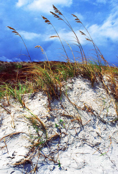 Photograph - Sand Dune And Sea Oats by Thomas R Fletcher