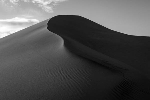 Photograph - Sand Dune Beetle Tracks by TM Schultze
