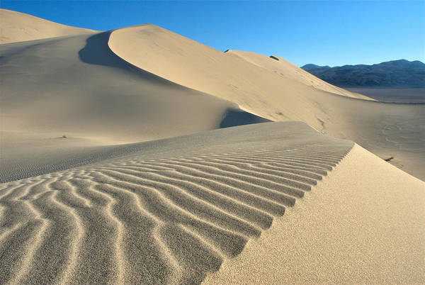 Photograph - Sand Dune Fans by David Andersen