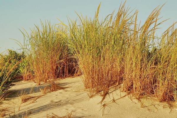 Wall Art - Photograph - Sand Dune I - Jersey Shore by Angie Tirado
