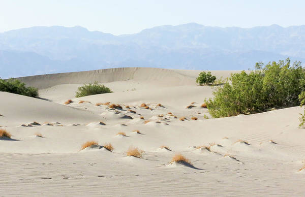Photograph - Sand Dunes Plants Hills by Patti Deters