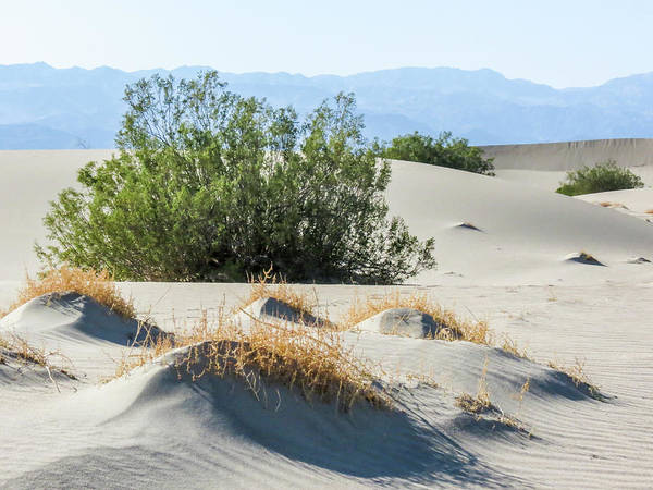 Photograph - Sand Dunes, Plants, Mountains by Patti Deters