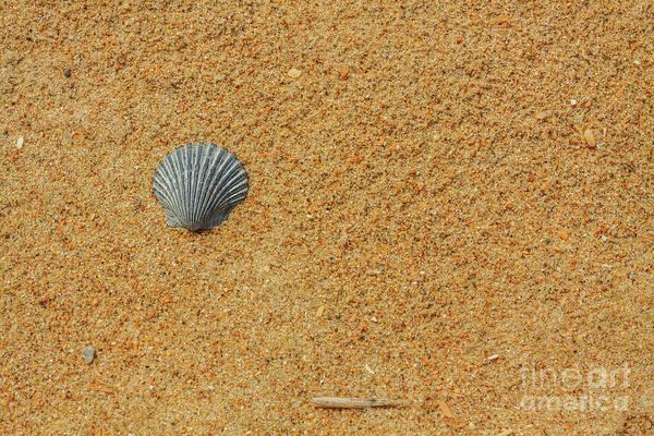 Wall Art - Digital Art - Sand Shells And Sea by Randy Steele