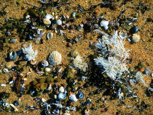 Painting - Sand Shells And Stuff by RC DeWinter