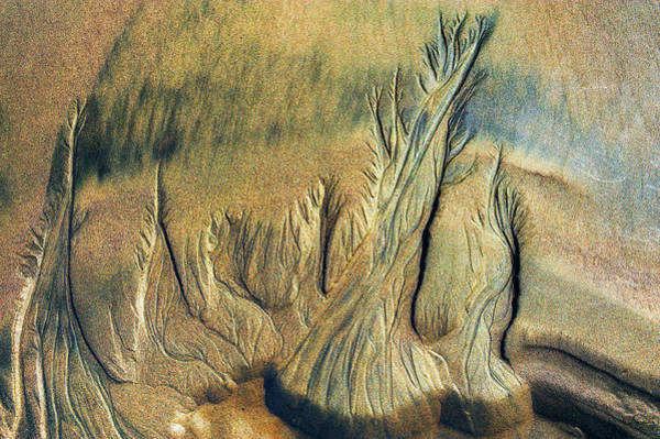 Photograph - Sand Slides by Dee Browning