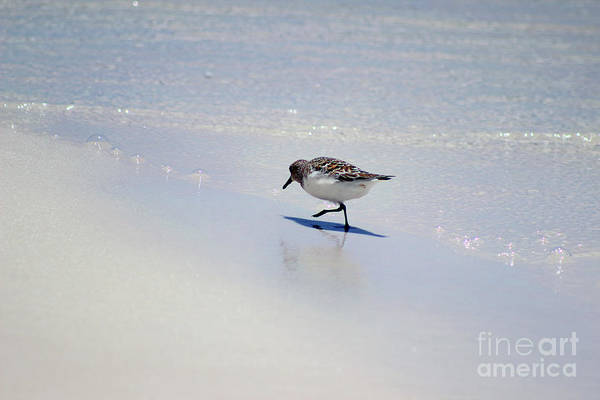 Photograph - Sanderling And Ocean Bubbles by Karen Adams
