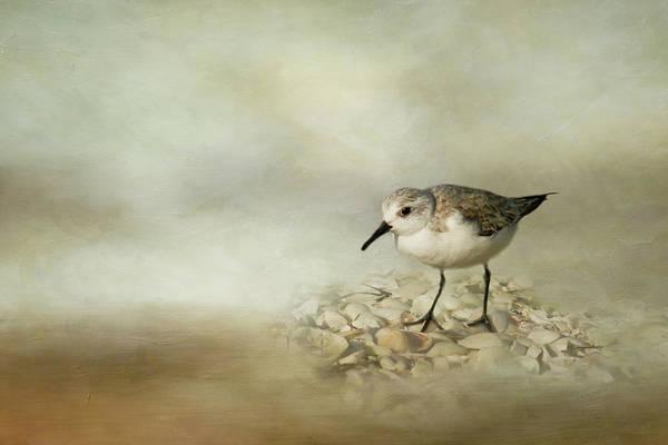 Bird Watcher Photograph - Sanderling by Cindi Ressler