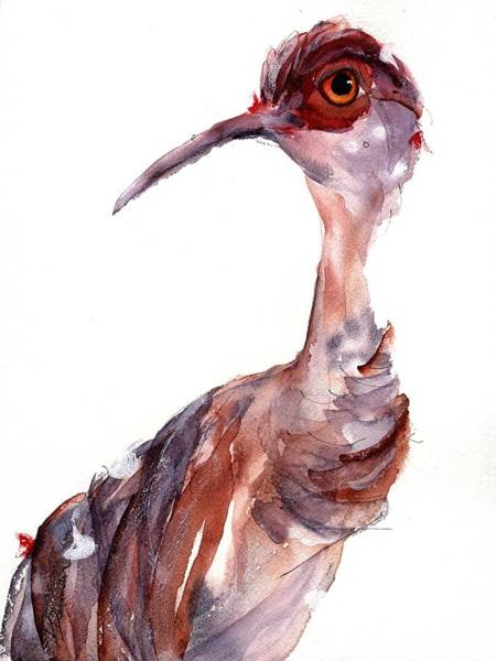 Painting - Sandhill Crane by Dawn Derman
