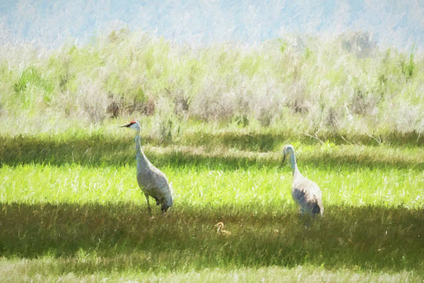 Photograph - Sandhill Crane Family, No. 2 by Belinda Greb