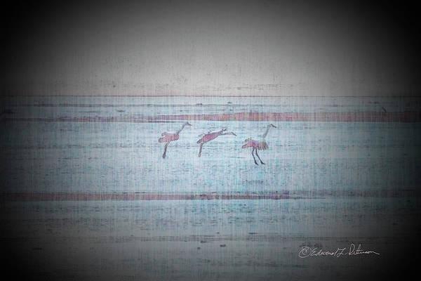 Photograph - Sandhill Crane Landing by Edward Peterson