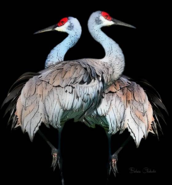 Wall Art - Painting - Sandhill Crane Mirror Image by Barbara Chichester