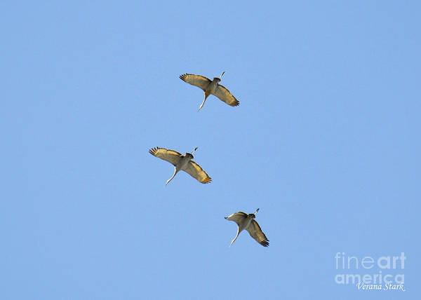 Wall Art - Photograph - Sandhill Cranes 2 by Verana Stark
