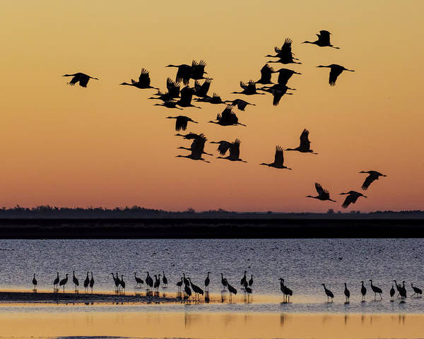 Photograph - Sandhill Cranes At Sunrise 01 by Rob Graham
