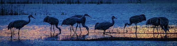 Photograph - Sandhill Cranes At Twilight by Bruce Bonnett