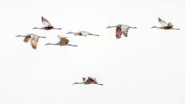 Photograph - Sandhill Cranes by David Wynia
