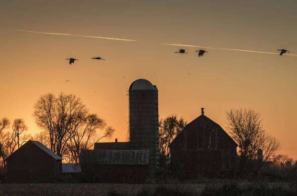 Photograph - Sandhill Cranes Flying Into The Sunset 2015-1  by Thomas Young