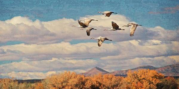 Photograph - Sandhill Cranes Over Bosque Del Apache Wildlife Refuge, New Mexico by Flying Z Photography by Zayne Diamond