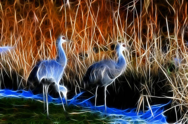 Photograph - Sandhill Cranes Pair Fractal by Lawrence Christopher