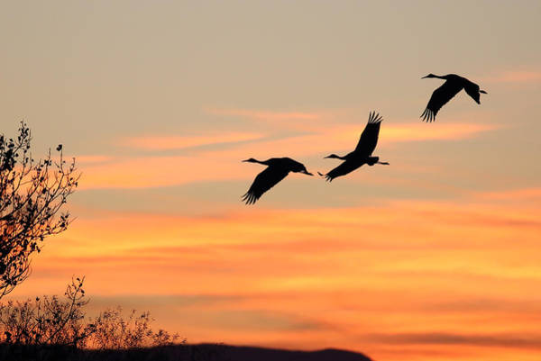 Photograph - Sandhill Sunrise Three by Jean Clark