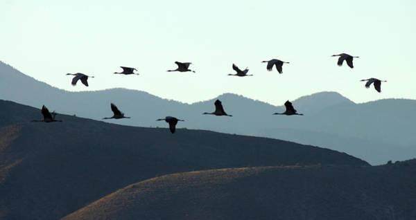 Photograph - Sandhills In Silhouette by Leda Robertson
