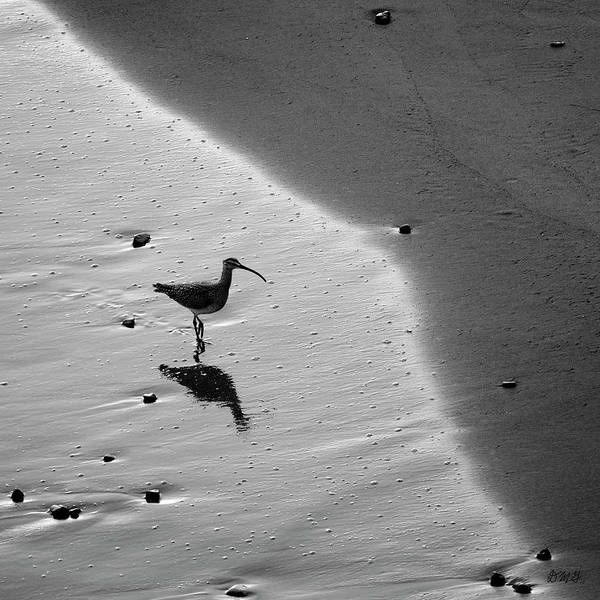 Photograph - Sandpiper I Bw Sq by David Gordon