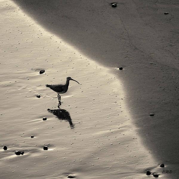 Photograph - Sandpiper I Bw Sq Toned by David Gordon