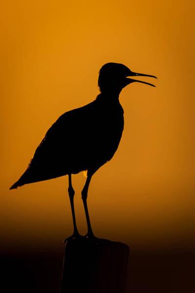 Photograph - Sandpiper Silhouette by Jeff Phillippi