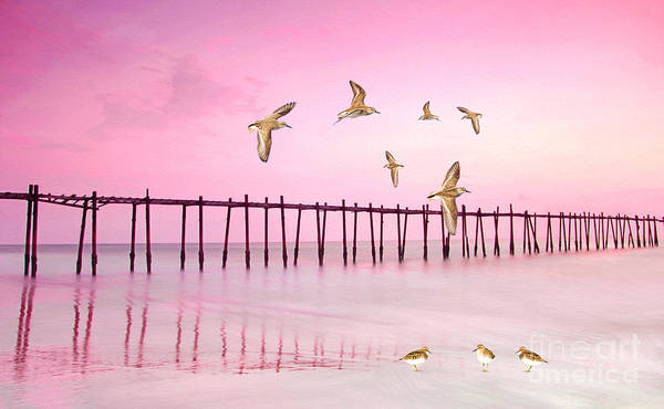 Wade Photograph - Sandpiper Sunset by Laura D Young