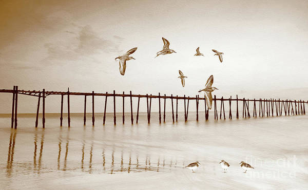 Wade Photograph - Sandpipers In Sepia by Laura D Young