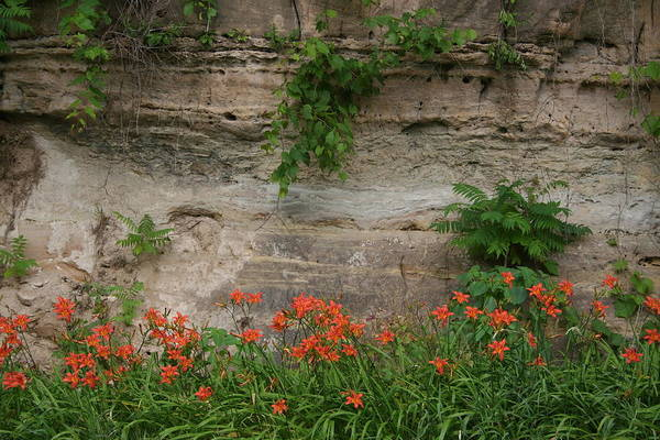 Photograph - Sandstone Lilies by Dylan Punke