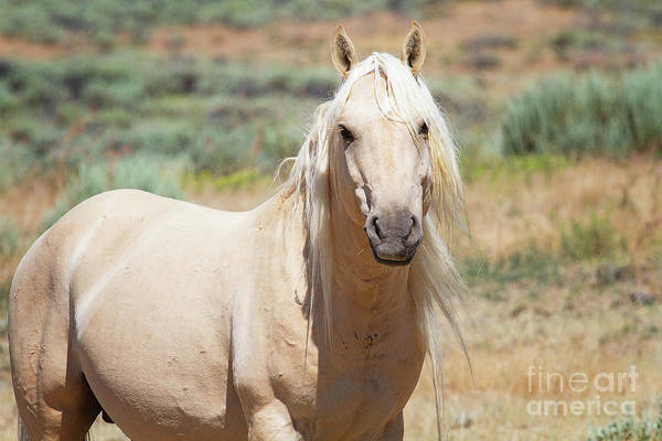 Photograph - Sandwash Basin Stallion by Jim Garrison