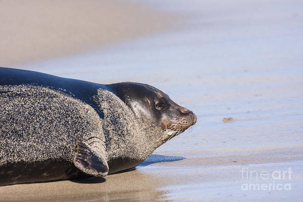 Wall Art - Photograph - Sandy Afternoon For A Seal by Ruth Jolly