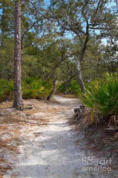 Coast Live Oak Photograph - Sandy Path In Hunting Island South Carolina by Louise Heusinkveld