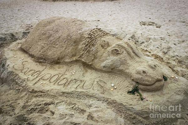 Wall Art - Photograph - Sandypotamus - Sand Sculpture by Colleen Kammerer