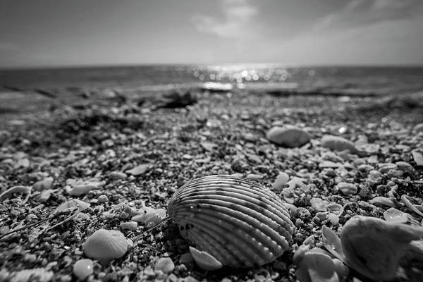 Photograph - Sanibel Island Sea Shell Fort Myers Florida Black And White by Toby McGuire