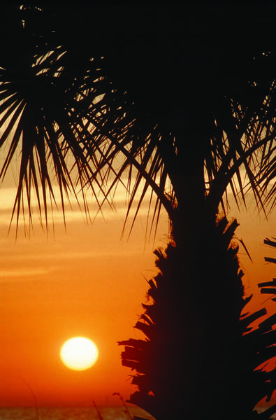 Photograph - Sanibel Island Sunrise by Steve Somerville
