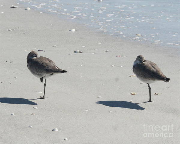 Photograph - Sanibel's Gulls by The Art of Alice Terrill