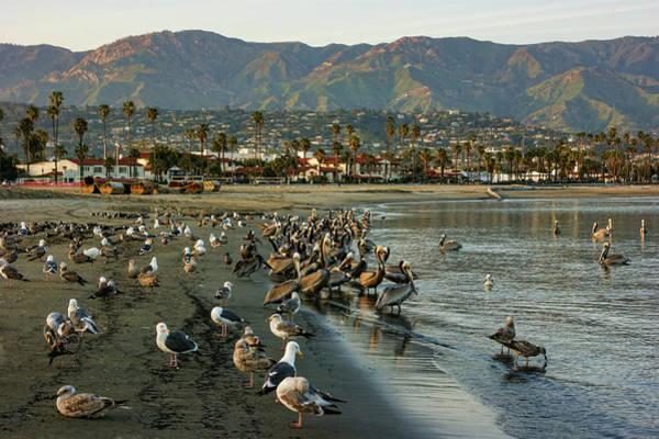Painting - Santa Barbara Sunset Crowd On The Beach by Georgia Mizuleva