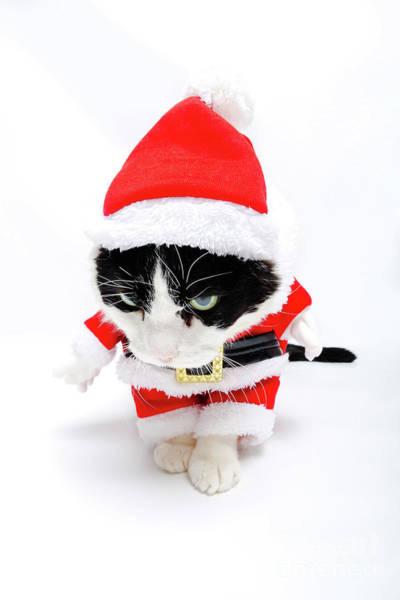 Photograph - Santa Claus Hat Cat by Benny Marty
