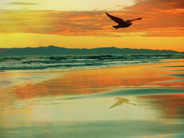 Seagulls Mixed Media - Santa Cruz Seagull by Priscilla Huber