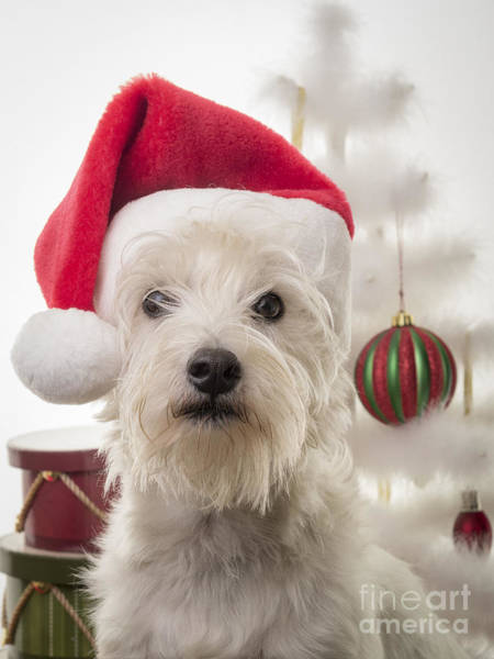 Photograph - Santa Dog Is Coming To Town by Edward Fielding