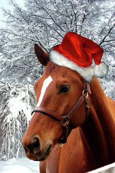 Wall Art - Digital Art - Santa Horse by Alynne Landers
