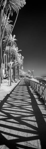 Wall Art - Photograph - Santa Monica Shadows And Palms by Sean Davey