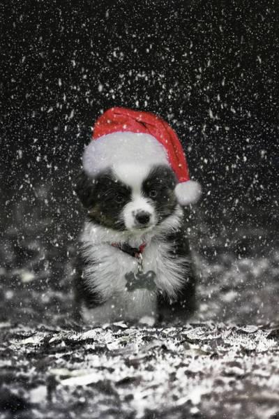 Photograph - Santas Helper Christmas Puppy Art by Jai Johnson
