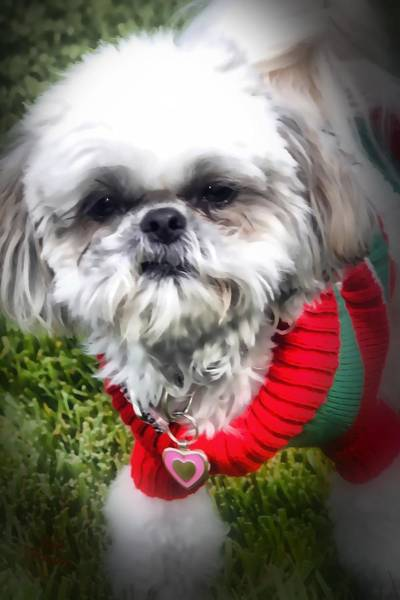 Photograph - Santas Helper by Kathy Tarochione